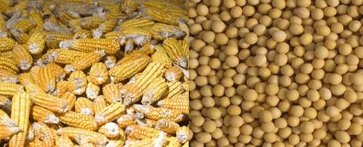 trading en soja y en maiz